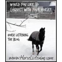Horse Listing  Connect