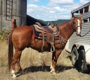 Eugene Horse Auction @ Eugene Horse Auction | Junction City | Oregon | United States