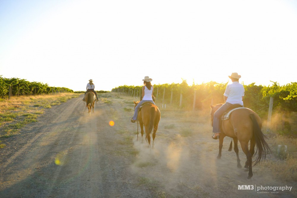 Wine Tasting Trail Ride on Red Mountain @ Red Mountain Trails | Benton City | Washington | United States