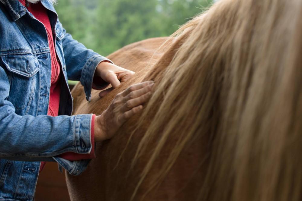 Intro to Bodywork for Horses @ Vaughn | Washington | United States