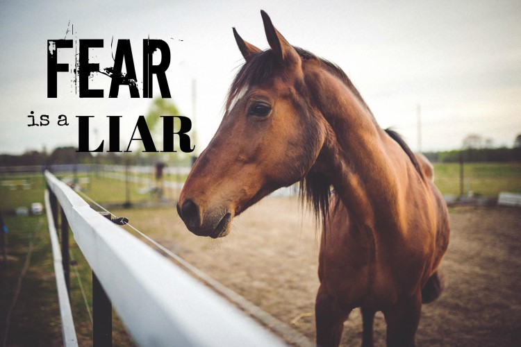 Overcoming Fear with Horses @ Rustic Heart Ranch | Puyallup | Washington | United States