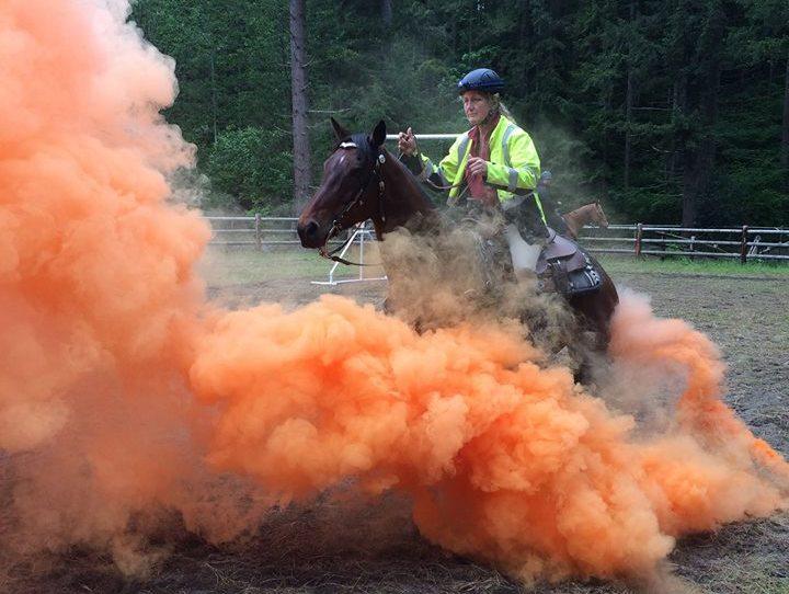 Confidence & De-Spooking Clinic @ Triple C Pleasure Horses | Enumclaw | Washington | United States