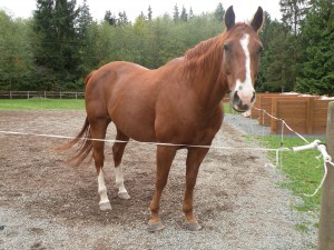 Horsekeeping in the Winter Wet - Farm Tour @ Private horse farm - address provided when you sign up | Stanwood | Washington | United States