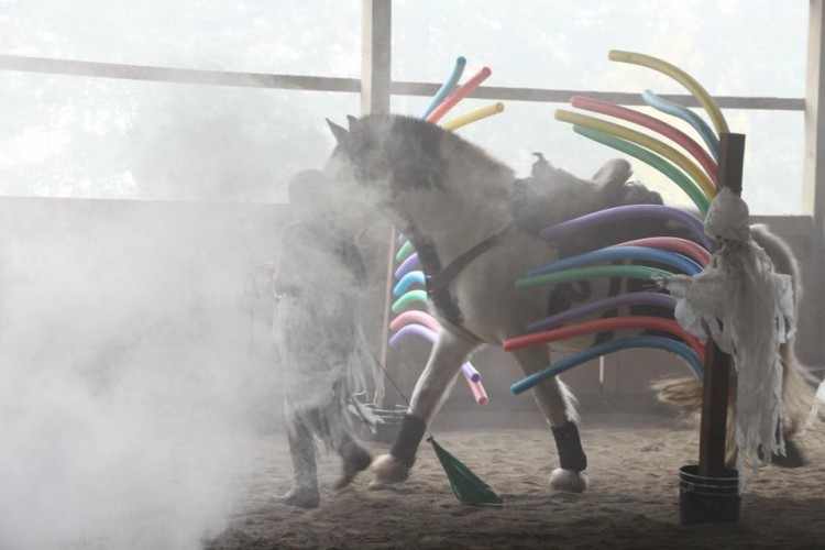 Despooking Clinic Indoors @ High Point Equestrian Center   Tacoma   Washington   United States