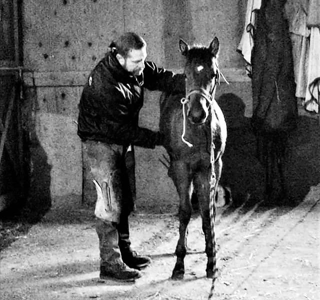 Baby horse image