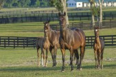 mare-and-foal-horse-farm-mares_Adobe-Stock-OK