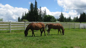 Spring Pastures and Nutrition @ Warm Beach Camp and Stables | Stanwood | Washington | United States