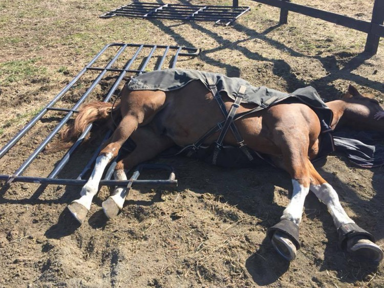 Equine Emergency First Aid @ Happy Path Meadows | Snohomish | Washington | United States
