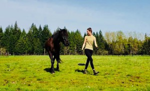 "The Infinite Bond Horse Method Presents ""Liberty 101"" Clinic @ High Mountain Equestrian  